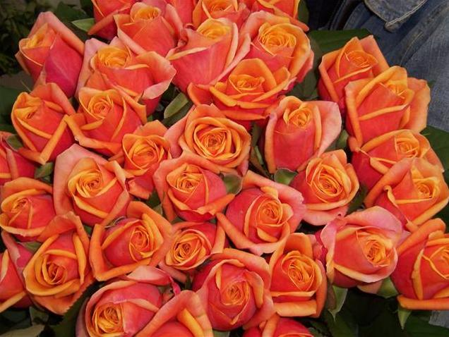 Розово оранжевые розы код 1108
